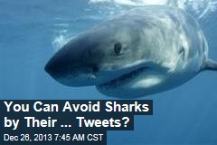 You Can Avoid Sharks By Their ... Tweets?