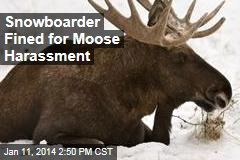 Snowboarder Fined for Moose Harassment