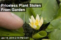 Priceless Plant Stolen From Garden