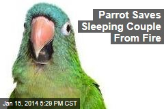 Parrot Saves Sleeping Couple From Fire