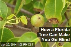 How a Florida Tree Can Make You Go Blind