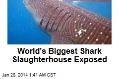 World's Biggest Shark Abattoir Uncovered