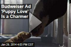 Budweiser Ad 'Puppy Love' Is a Charmer