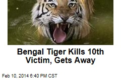 Bengal Tiger Kills 10th Victim, Gets Away