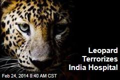 Leopard Terrorizes India Hospital