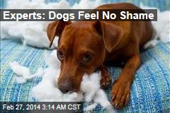 Experts: Dogs Feel No Shame