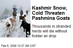 Kashmir Snow, Cold Threaten Pashmina Goats