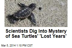 Scientists Dig Into Mystery of Sea Turtles' 'Lost Years'
