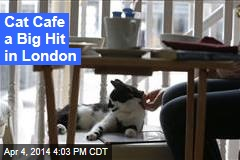Cat Cafe a Big Hit in London