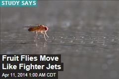 Fruit Flies Move Like Fighter Jets