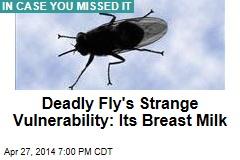 Tsetse Fly's Strange New Vulnerability—Its Breast Milk