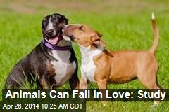 Animals Can Fall In Love