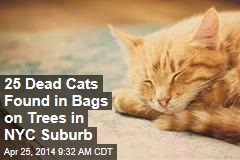 25 Dead Cats Found in Bags on Trees in NYC Suburb