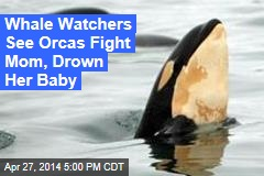 Whale Watchers See Orcas Fight Mom, Drown Her Baby
