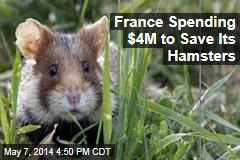 France Spending $4M to Save Its Hamsters