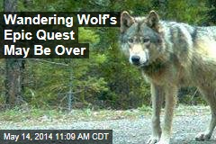 Wandering Wolf's Epic Quest for Love May Be Over