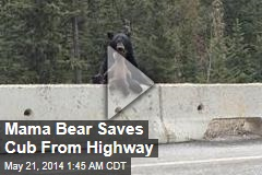 Mama Bear Saves Cub From Highway