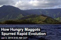 How Hungry Maggots Spurred Rapid Evolution