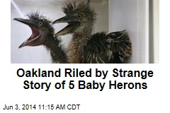 Oakland Freaks Out Over Injured Baby Birds