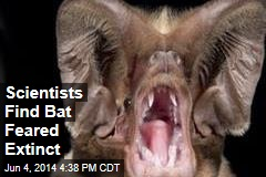 Scientists Find Bat Feared Extinct