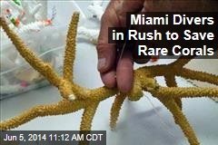 Miami Divers in Rush to Save Rare Corals