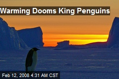 Warming Dooms King Penguins