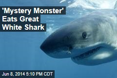 'Mystery Monster' Eats Great White Shark