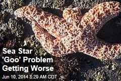 Sea Star 'Goo' Problem Getting Worse