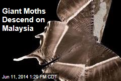 Giant Moths Descend on Malaysia