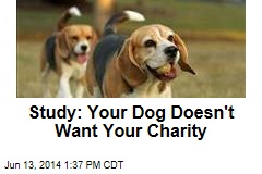Study: Your Dog Doesn't Want Your Charity