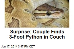 Surprise: Couple Finds 3-Foot Python in Couch