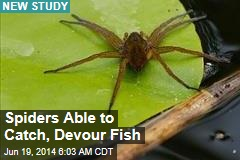 Spiders Able to Catch, Devour Fish