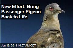Geneticists' Goal: 'De-Extinction' of Passenger Pigeon