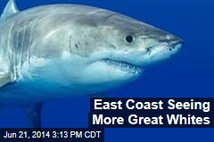 East Coast Seeing More Great Whites