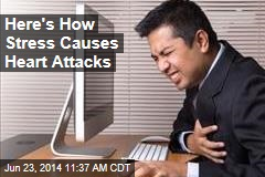 Here's How Stress Causes Heart Attacks