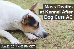 Mass Deaths at Kennel After Dog Cuts AC