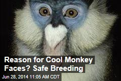 Reason for Cool Monkey Faces? Safe Breeding
