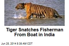 Tiger Snatches Fisherman From Boat in India