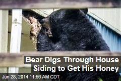 Bear Digs Through House Siding to Get His Honey