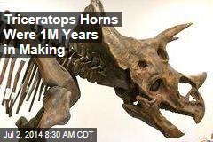 Triceratops Horns Were 1M Years in Making