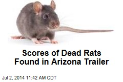 Scores of Dead Rats Found in Arizona Trailer