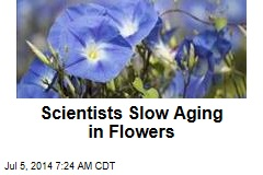 Gene Tinkering Doubles Lifespan ... of Flowers