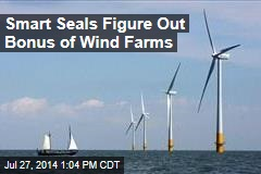 Smart Seals Figure Out Bonus of Wind Farms