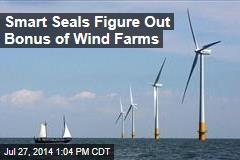 Smart Seals Figure Out Bonus of Wind Farms