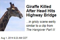 Giraffe Killed After Head Hits Highway Bridge