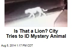 Is That a Lion? City Tries to ID Mystery Animal