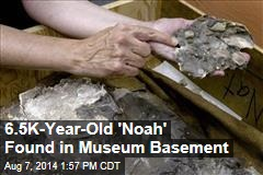 6.5K-Year-Old 'Noah' Found in Museum Basement