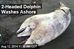 2-Headed Dolphin Washes Ashore