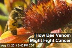 How Bee Venom Might Fight Cancer