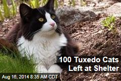 100 Tuxedo Cats Left at Shelter